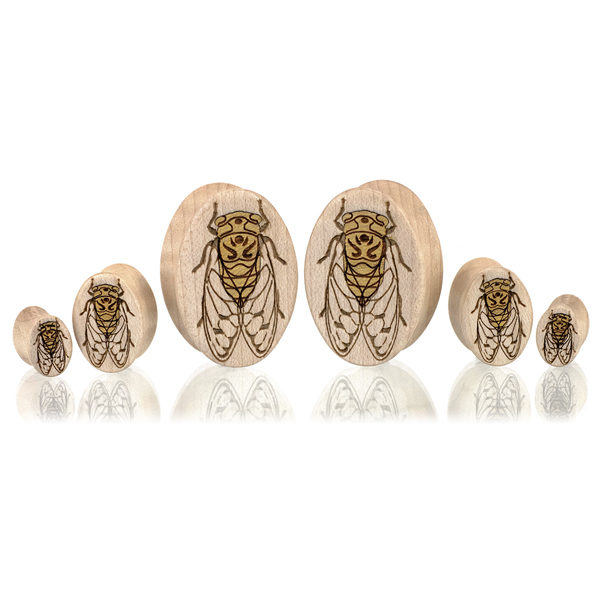 Cicada Ovals - Custom Plugs
